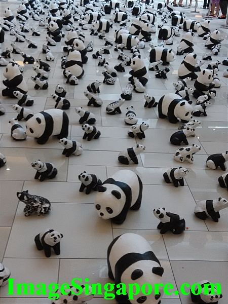 Difficult to view the baby pandas.