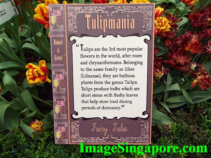 Tulipmania Explained