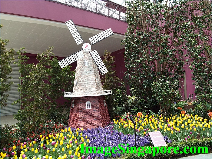 Tulipmania 2015 at Gardens by the Bay