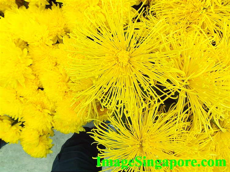Chrysanthemums - Gardens by the Bay