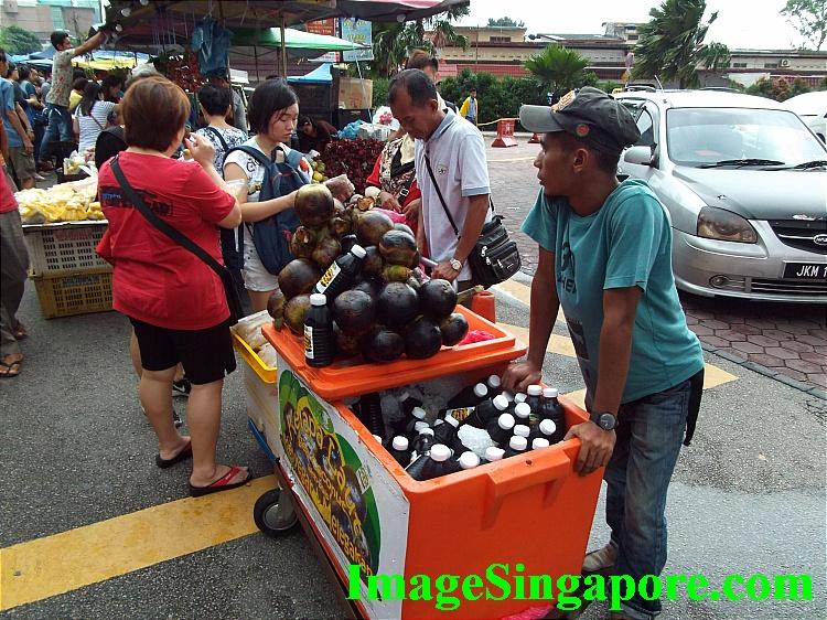 Sea Coconuts